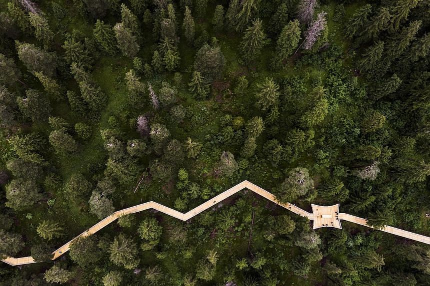 """The """"Senda dil Dragun"""" (Way of the Dragon) is the world's longest treetop walk. Located in Laax, Switzerland, the 1.56km-long walk connects the villages of Laax Dorf and Laax Murschetg and offers five adventure stops, including one with a towering sp"""