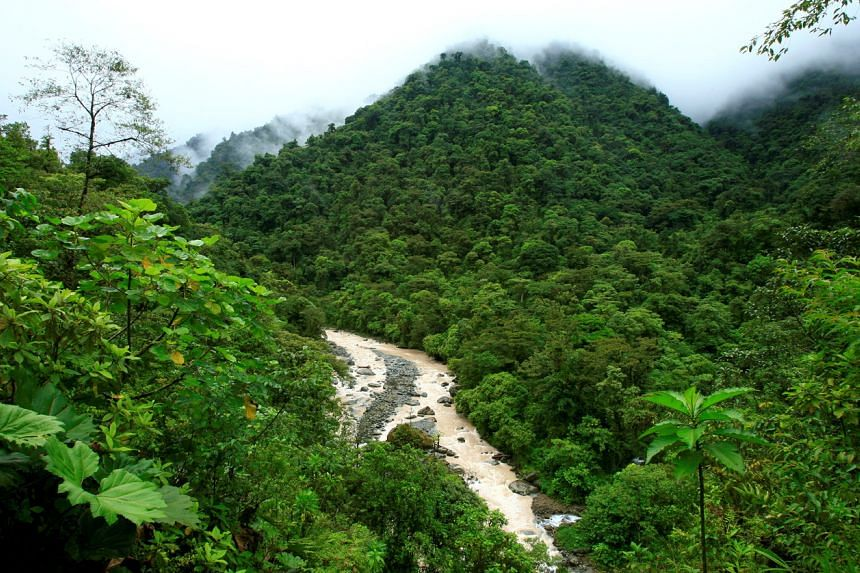 Costa Rica, a popular eco-tourism destination, aims to decarbonise by 2050.