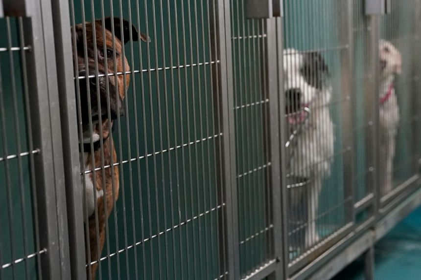 Dogs are kenneled at the Animal Care Centre of New York on June 25, 2021.