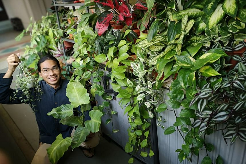 Mr Muhammad Syahid Shamsuri's green room and corridor - nicknamed Gardens By The Corridor - are famous among his neighbours and friends.