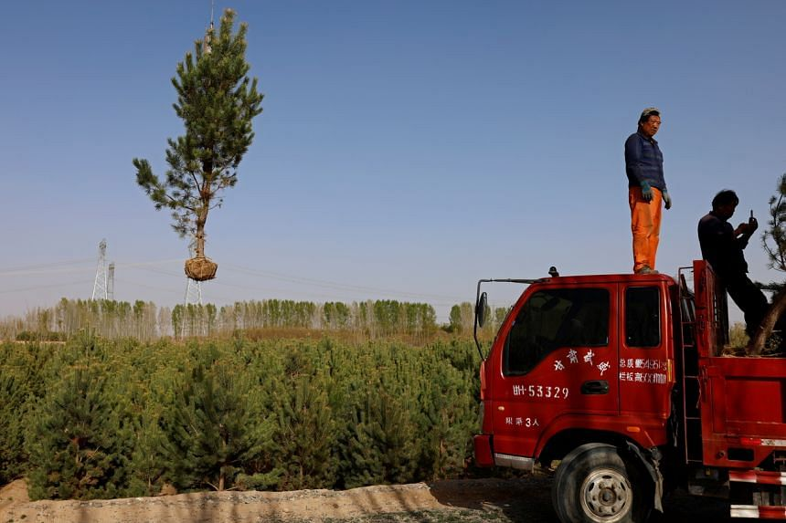China aims to increase its forest coverage rate to 24.1 per cent.