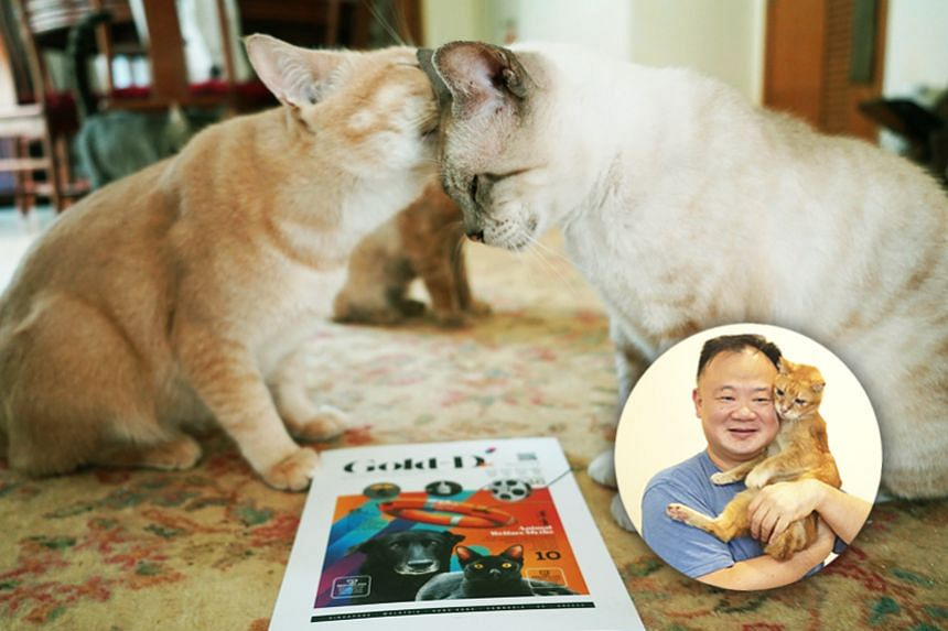 Friend to the animals Chan Chow Wah established the Animal Human Alliance (AHA) in 2013 to help pet owners provide healthier lifestyles for their four-legged companions while keeping strays off the streets. Gold-D is AHA's in-house brand of healthy p