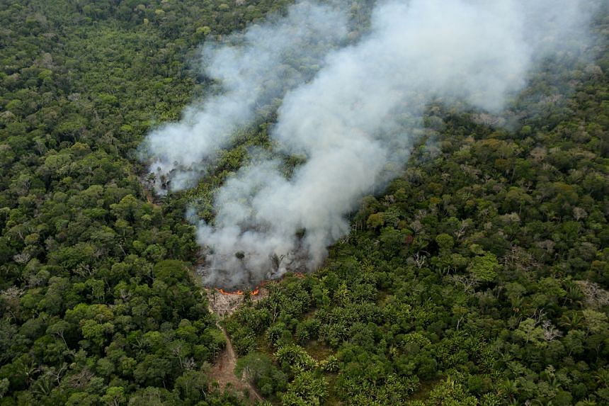 The Amazon plays a vital role in regulating the earth's climate by absorbing and storing planet-heating carbon dioxide.