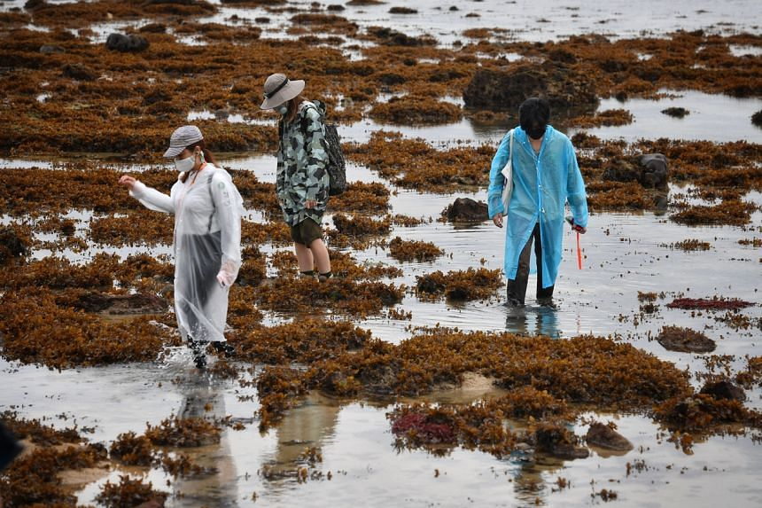 Participants exploring marine life during an intertidal walk on Pulau Hantu on Aug 25, 2021.