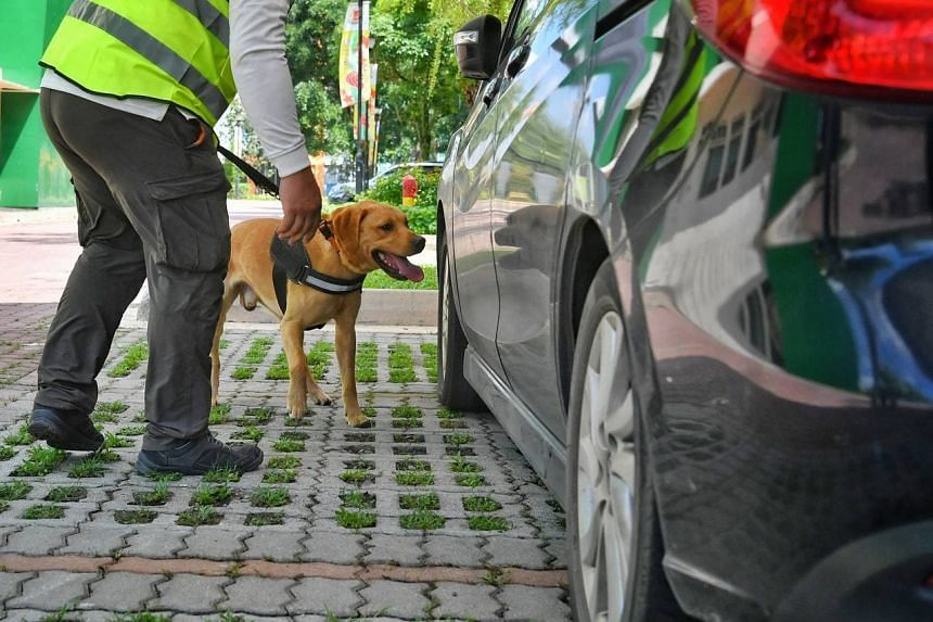 A dog from the NParks K9 Unit search a car for illegal wildlife parts at the Centre for Wildlife Forensics, on Aug 27, 2021.