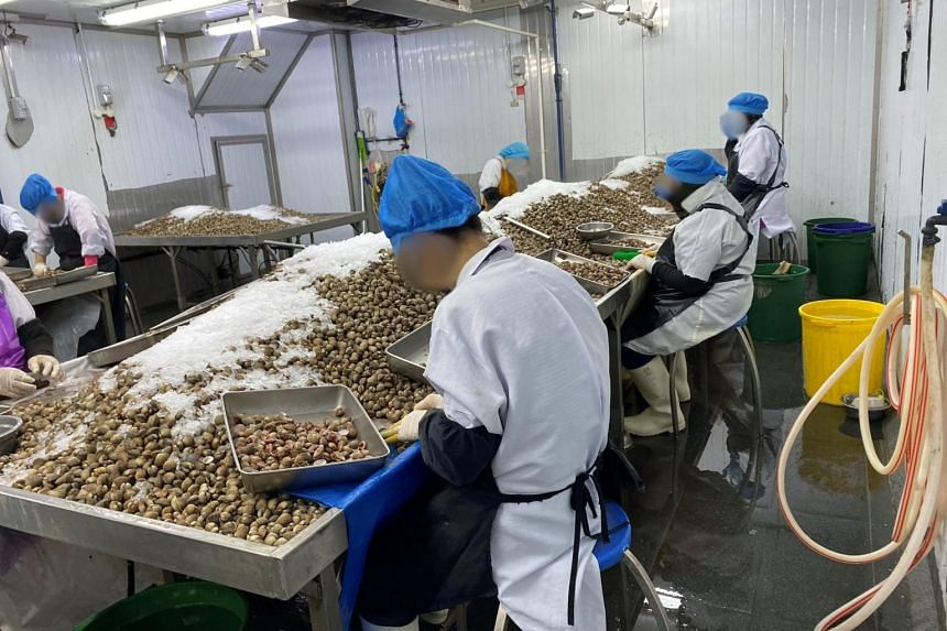 An illegal cockle processing operation was discovered at the facility in Woodlands Loop.
