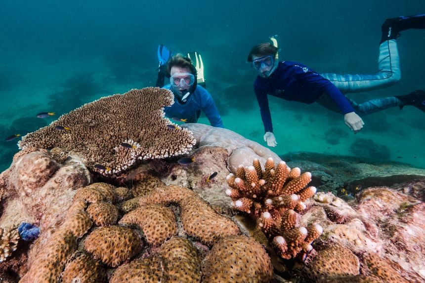 The coral, which is 2.4 metres wider than any other measured in the reef, is believed to be between 421 and 438 years old.