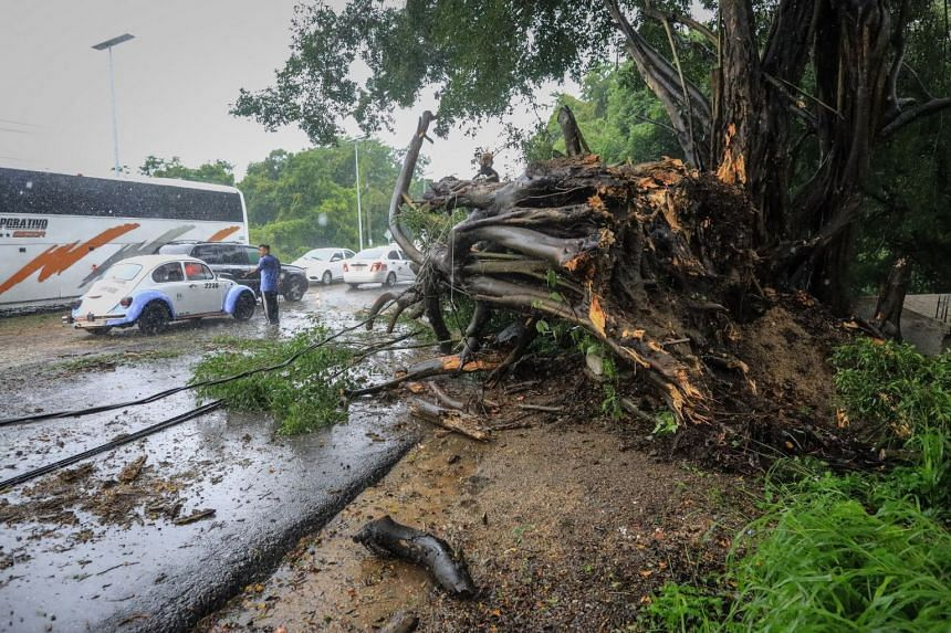 A tree that fell with the passing of Hurricane Nora in Acapulco, Mexico, on Aug 28, 2021.