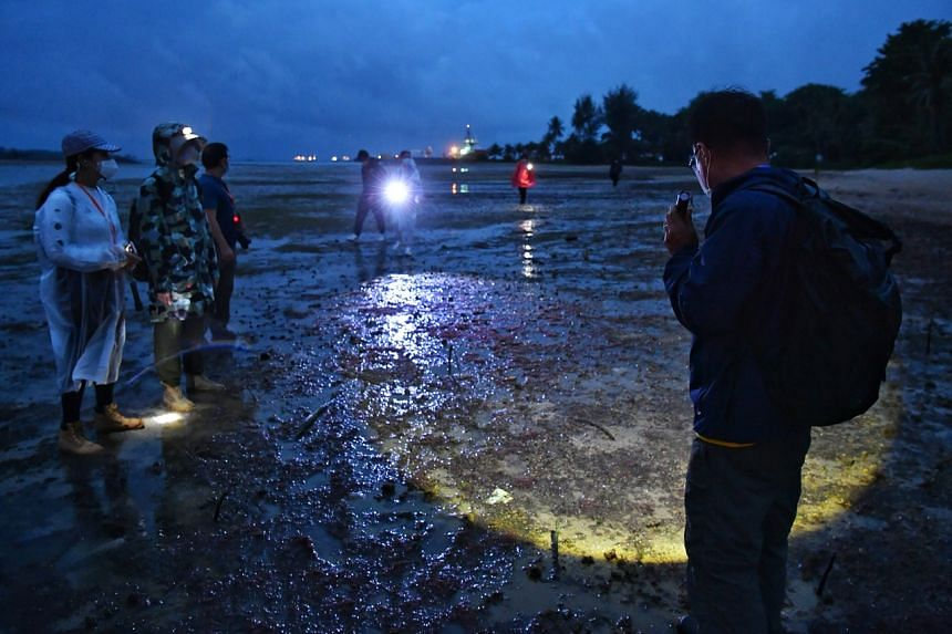 Participants exploring the marine life during the intertidal walk conducted on Pulau Hantu in the wee hours of Aug 25, 2021.