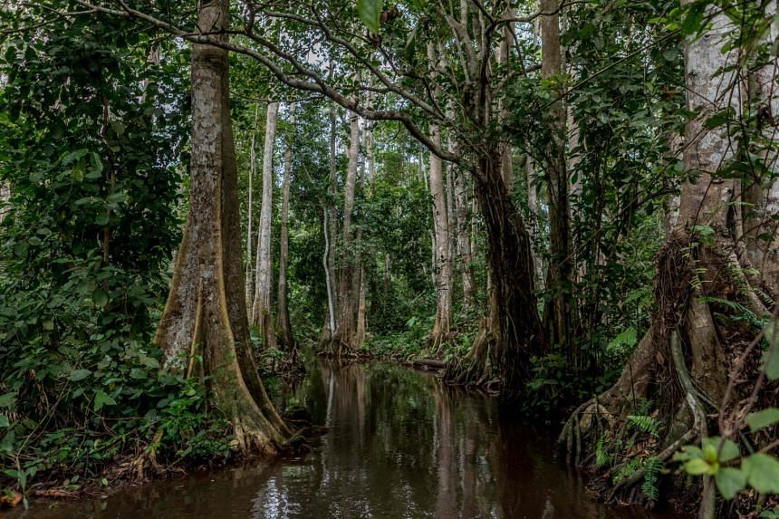 The extinction of a single tree species could prompt the loss of many others.