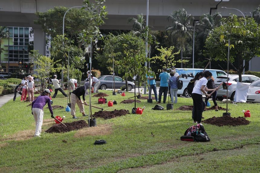 Members of Youth Corps Singapore and Pasir Panjang residents planting trees at Pasir Panjang Park on Sept 4, 2021.