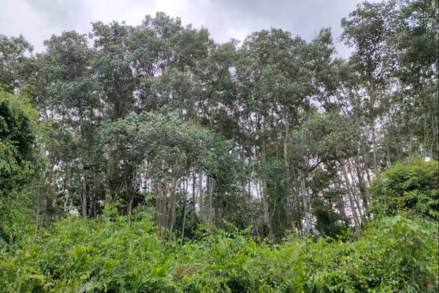 Selangor's state government caused an uproar when it revealed it was allowing parts of the 8,000-year-old North Kuala Langat forest to be developed.