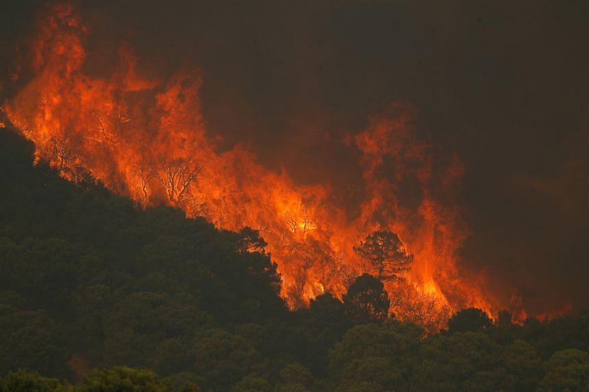 The blaze broke out in the Sierra Bermeja mountains in Malaga on Sept 8, 2021.