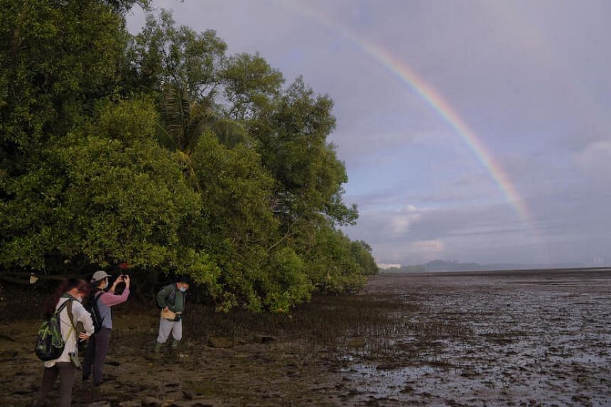 NParks staff carry out a bird survey at the Mandai mudflats on July 12, 2021.