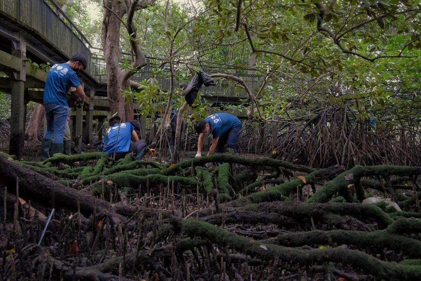 Mangroves are considered a nature-based solution to help mankind mitigate and adapt to the changing climate.