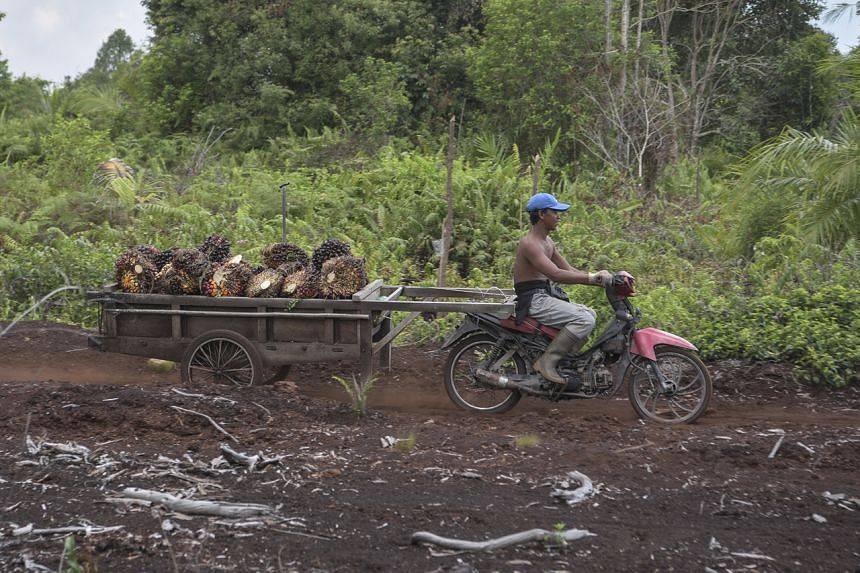 Indonesia launched the moratorium on new plantation permits in September 2018 to try to stop deforestation and improve governance in the industry.