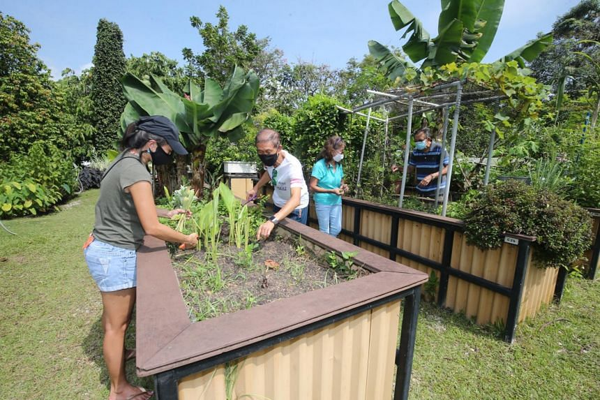 Community gardeners working at their allotment gardens in HortPark. The 360 new plots will bring Singapore's total to more than 2,000.