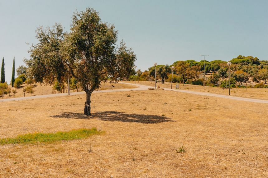 In Lisbon, a city in southern Europe and the capital of Portugal, lawns are being replaced by meadows.