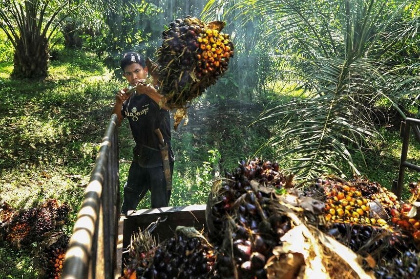 A new omnibus Job Creation Law would be used to deal with issues around sustainable palm oil production.