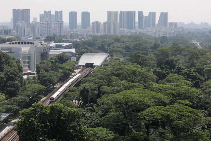 In Singapore, urban trees can only do so much in flood proofing.