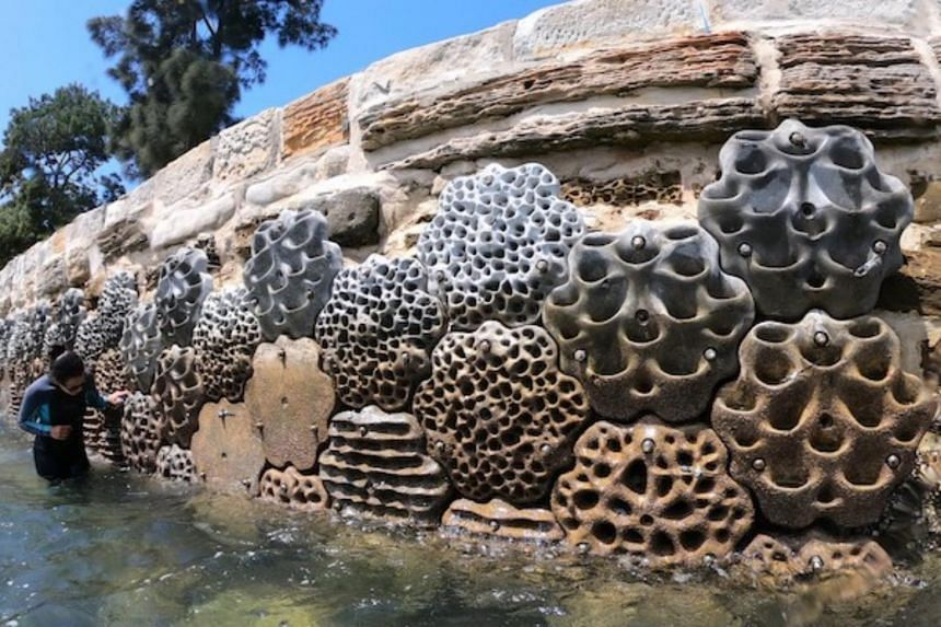 About 50 per cent of the natural shore of Sydney Harbour has been transformed by seawalls and pilings.