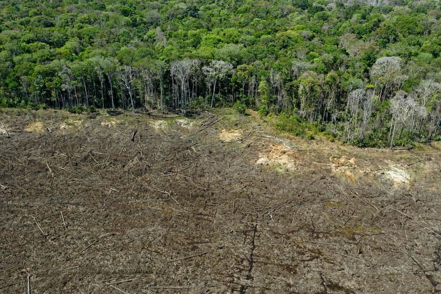 Cutting down forests has major implications for global goals to curb climate change.