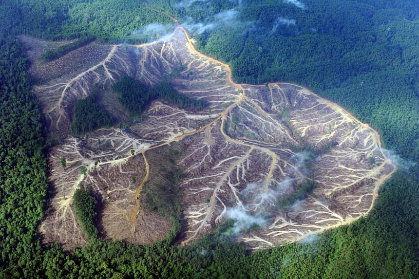 A photo from Aug 5, 2010 shows a logged area in the mountains of Jambi province in Indonesia's Sumatra island.