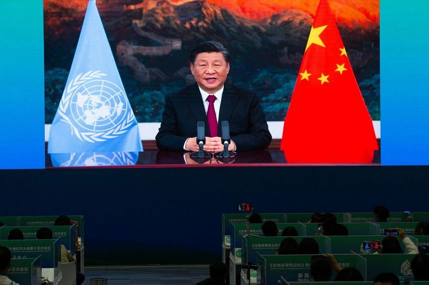 Media staff members watch a live image of Mr Xi Jinping speaking at the media centre of the UN Biodiversity Conference (COP 15) in Kunming, Yunnan on Oct 12, 2021.