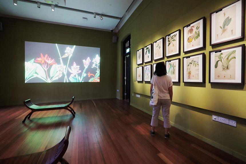 A selection of paintings from the Singapore Botanic Gardens archives on exhibit in the Botanical Art Gallery in the Inverturret House at the Singapore Botanic Gardens Gallop Extension.