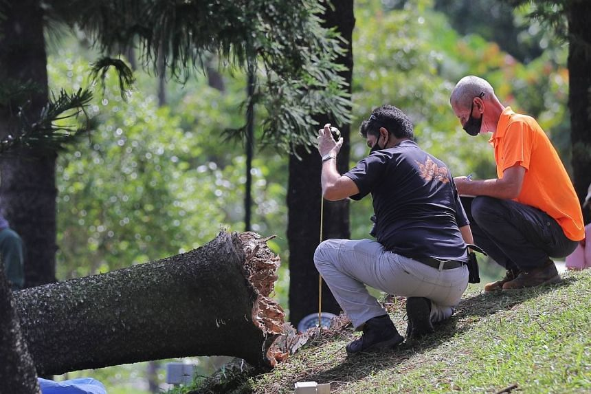 NParks personnel doing an investigation on the fallen tree in Marsiling Park on Feb 18, 2021.