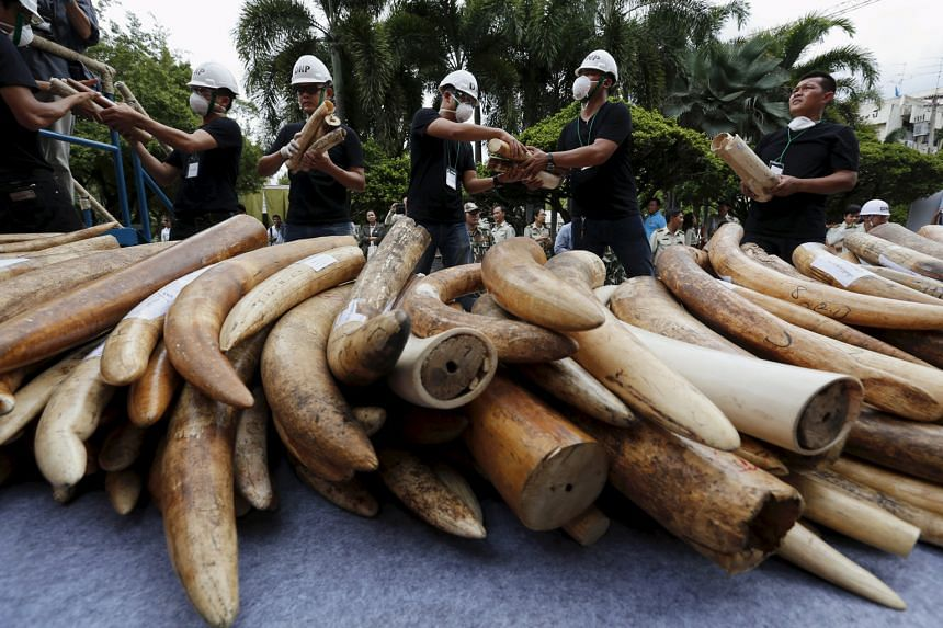 Confiscated elephant tusks about to be destroyed as part of a campaign against those involved in the illicit ivory trade.