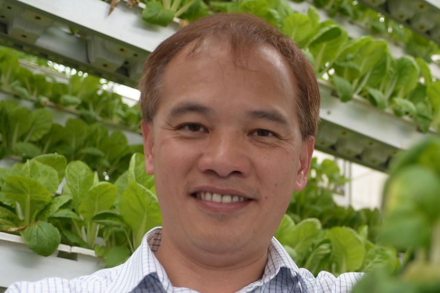 Mr Jack Ng's farm (top) in Lim Chu Kang houses 1,000 vertical farming towers.