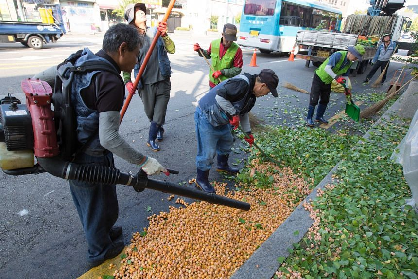A team from the Jung-gu district office working to remove ginkgo fruit from a tree in Jahamun Road near Gyeongbok Palace in downtown Seoul last Wednesday. The team can clear 10 to 15 trees a day.