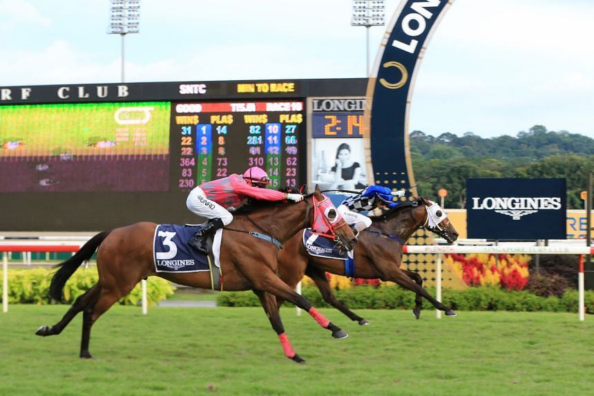 Cooptado (No. 7), with jockey Shafiq Rizuan astride, holds on to win the Longines Singapore Gold Cup yesterday over a late-charging Fastnet Dragon ridden by Alan Munro.
