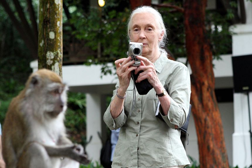 Scientists who use social media to expand their reach include world renowned American physicist Michio Kaku (left photo, centre), who has also appeared on many TV programmes. The Jane Goodall Institute, founded by prominent primatologist and animal r