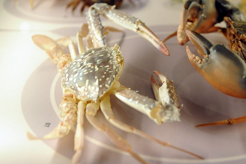 Swimming crabs were all thought to be part of one species until a 2010 study by researchers here showed otherwise.