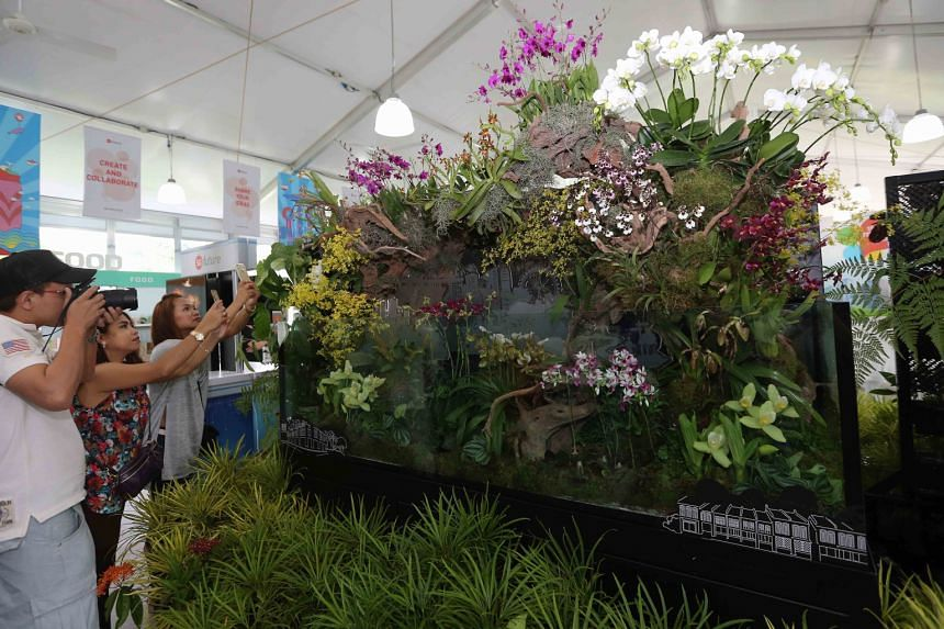 The terrariums are 2m long and 0.6m high (above), and one of them is decorated with more than 15 species of rare orchids (right).