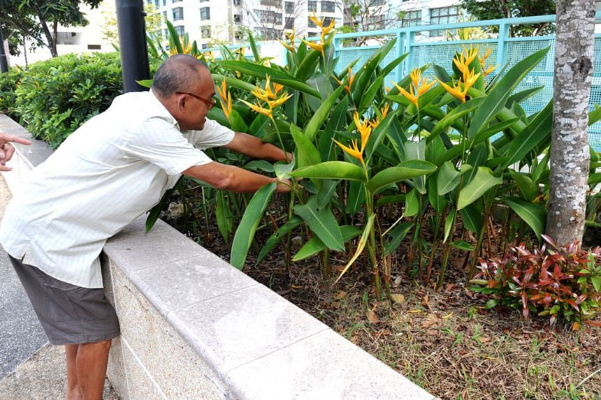 Retiree Tay Kim Sia showing how he found a newborn boy buried with a plastic bag around his neck in a roof-top garden in Eunos in 2011.