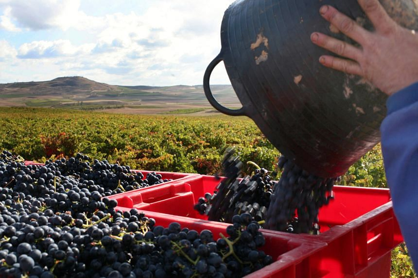 A worker loads a basket into a truck at a vineyard in Spain. Global warming has changed the way wine grapes grow.