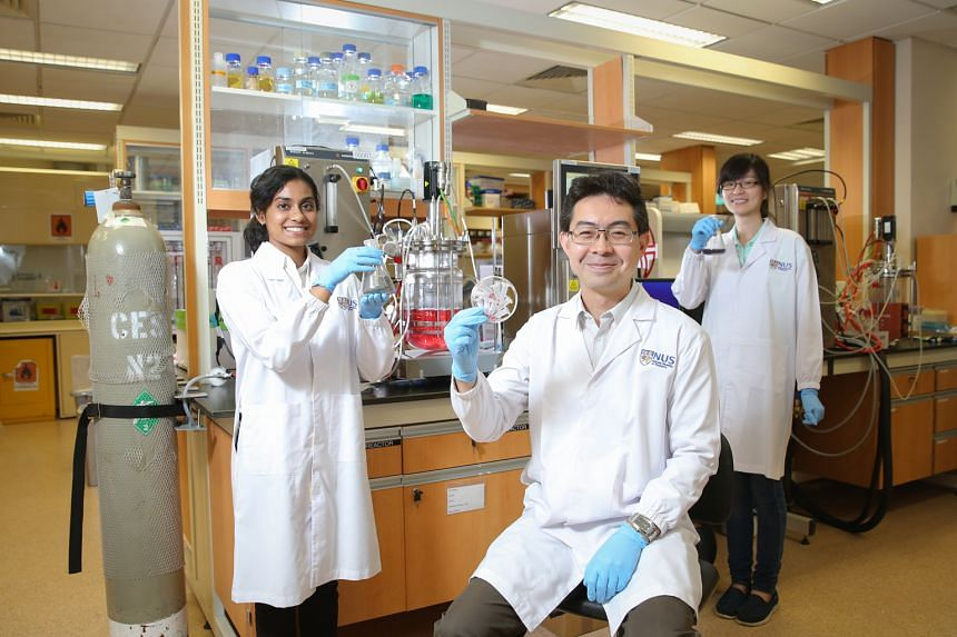 Associate Professor Yew with (from left) students Rashmi Rajasabhai and Valerie Ling, part of an NUS team that re-engineered a bacterium to extract metals like gold from e-waste. It is working with local e-waste company Cimelia to fine-tune the techn