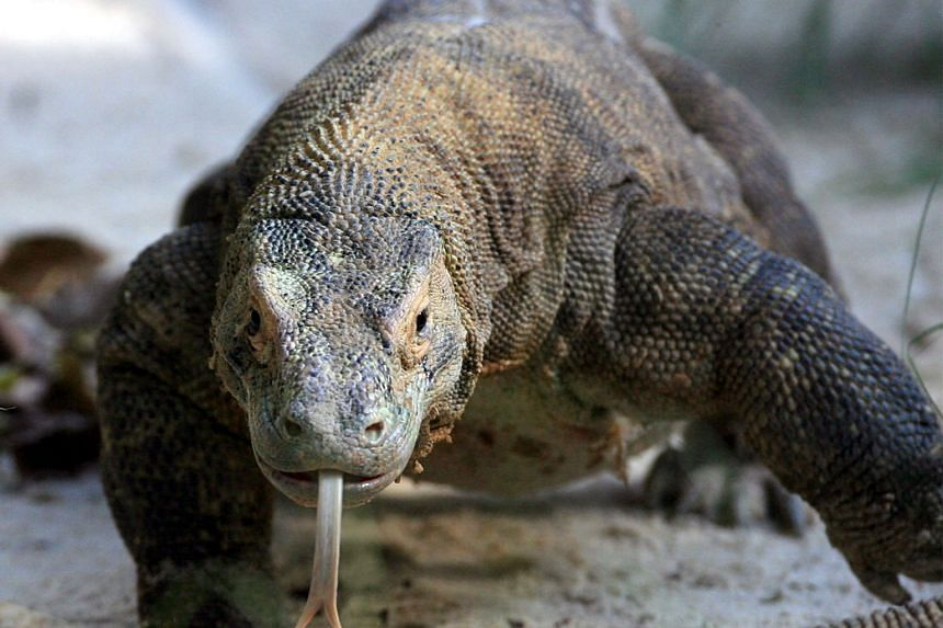 The most popular reptiles included the Komodo dragon, the Gila monster and the leatherback sea turtle.