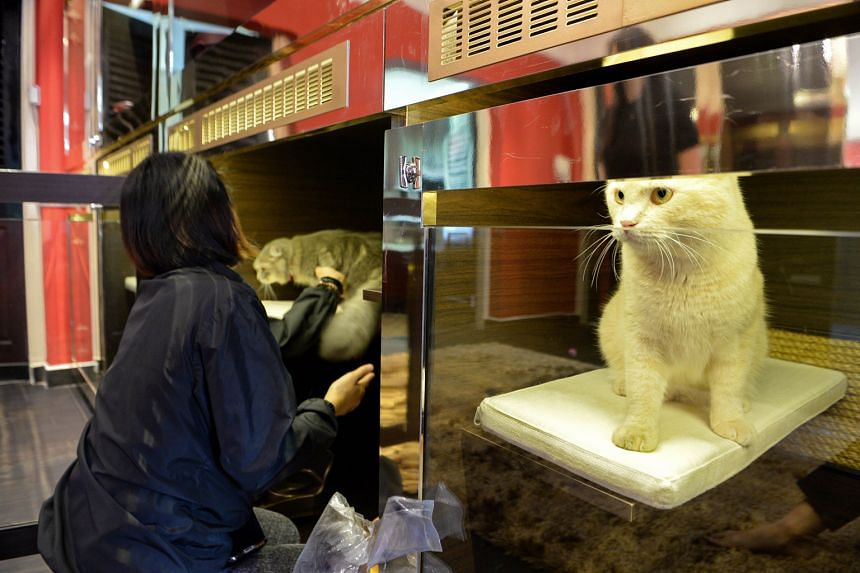Some pets are treated to the high life, as with this cat at a luxury pet hotel, yet owners may not realise the harm caused by keeping pets in environments that do not meet their pets' behavioural needs.