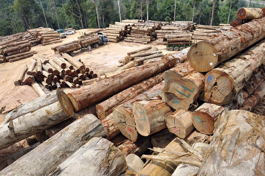 At least five logging depots, with thousands of high-quality logs, such as meranti, cengal and merbau, were found inside the Ulu Muda forest reserve in Kedah. Rainwater from the reserve flows to Perlis, Kedah and Penang states.