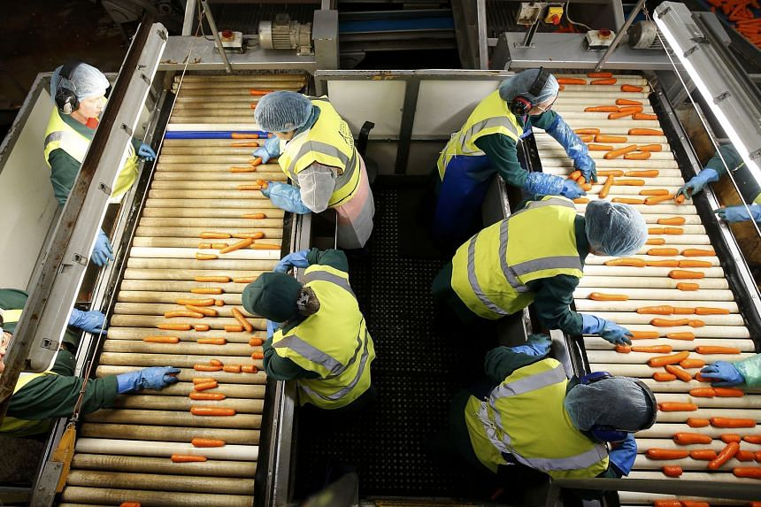 Workers sorting carrots at a farm in the British town of Goole. While Britain owed a gross contribution to the European Union of £19.1 billion (S$37.3 billion) in 2014, Brussels returns money to Britain for sectors including agriculture, regional de