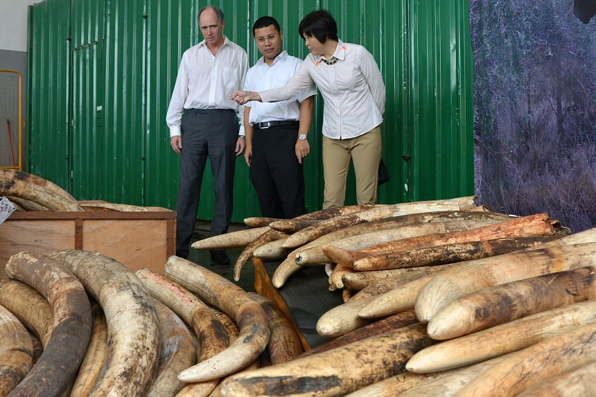 British High Commissioner Scott Whiteman (from left), Senior Minister of State Desmond Lee and AVA CEO Tan Poh Hong with some of the 7.9 tonnes of confiscated ivory waiting to be destroyed yesterday.
