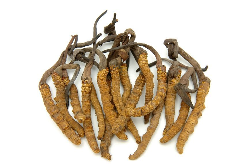 Cordyceps is one of the herbs used in traditional Chinese medicine.