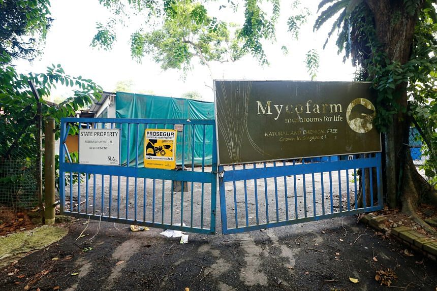 When ST visited Mycofarm Mushroom in Seletar West Farmway in June, there was no sign of farming activity - just a notice (left) saying the site was state property and reserved for future development.