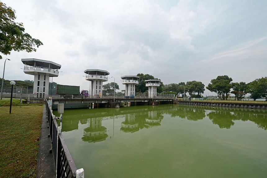 The authorities said the algae bloom has not affected fish in the reservoir or nearby fish farms and Sungei Buloh Wetland Reserve, although they are monitoring the situation.