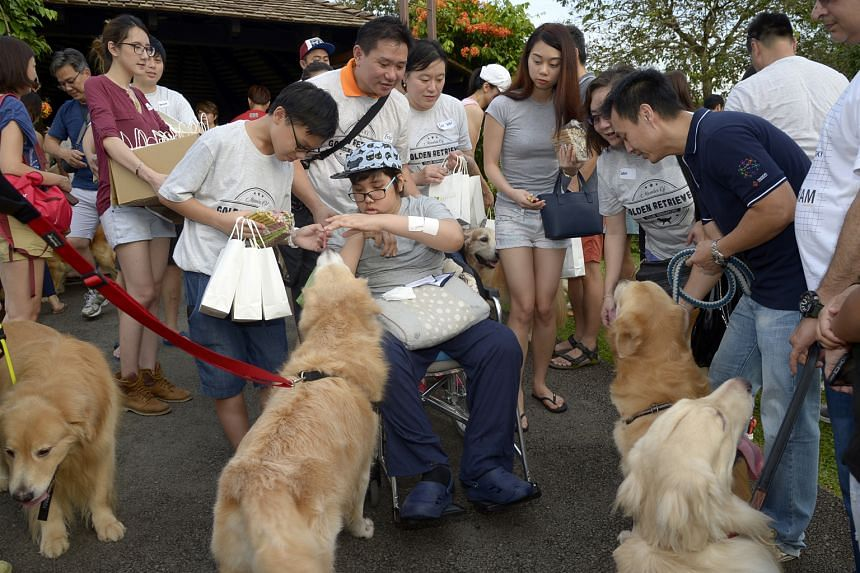 Ophthalmologist Dr Leo arranged a birthday party for Isaac (in wheelchair) after learning about his wish to pet golden retrievers. About 100 of the dogs showed up for the party at the Botanic Gardens on Sept 17.