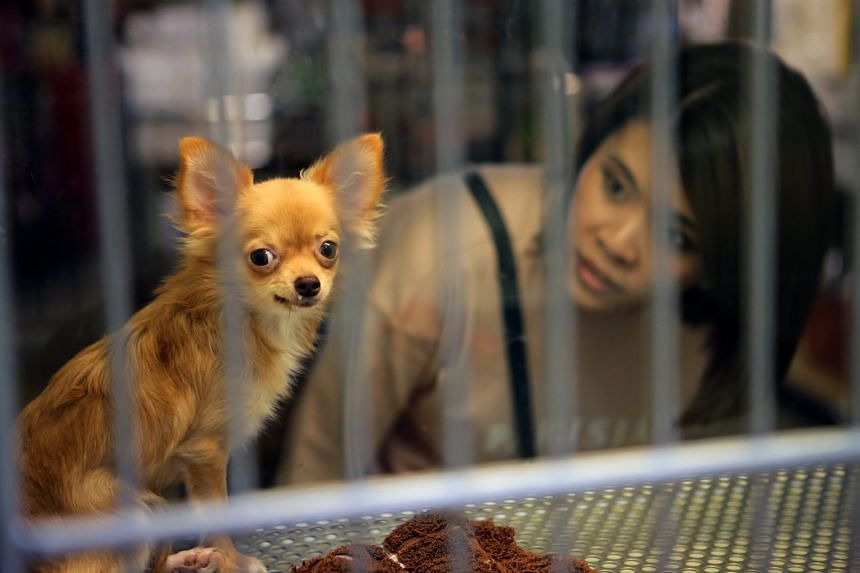 A visitor at a pet shop. The onus currently is on owners to license their dogs, which many fail to do, say those in the animal welfare community.